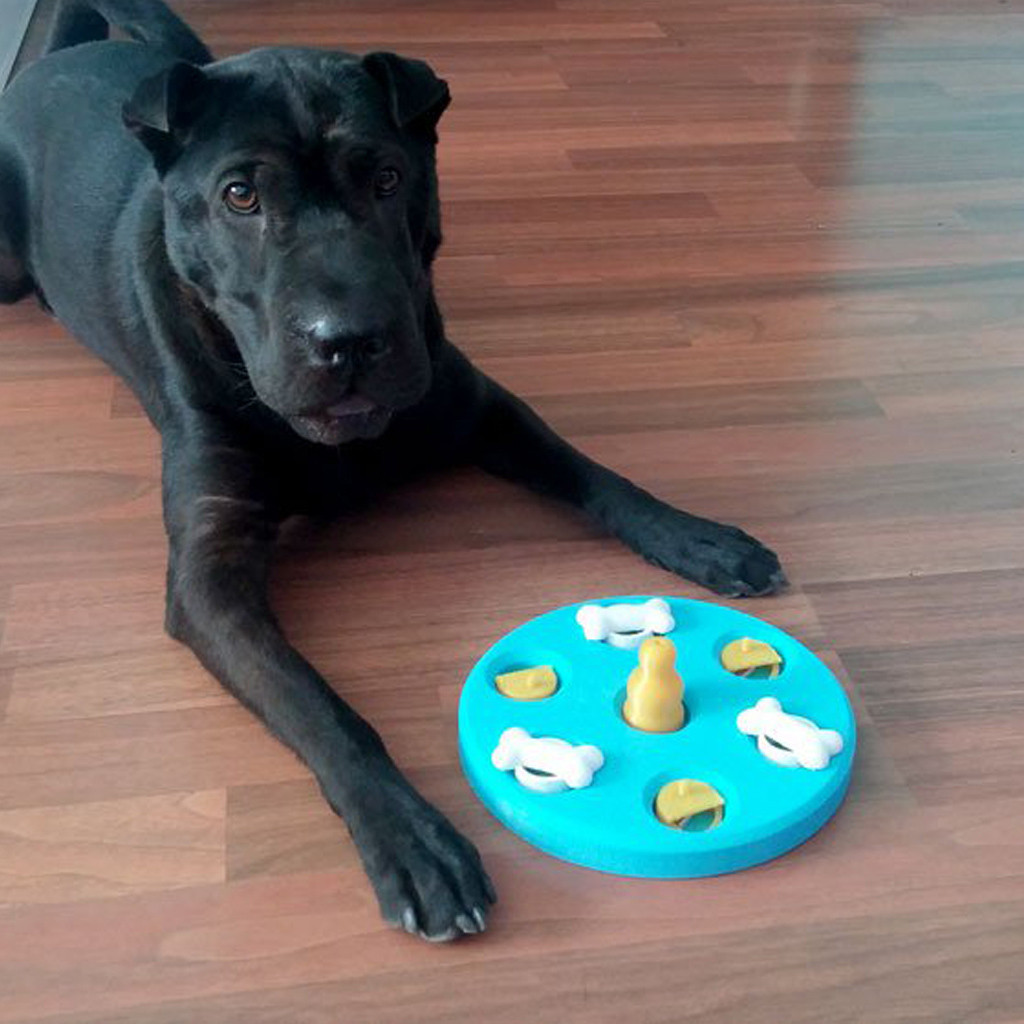 dog playing with smart 3d printed game